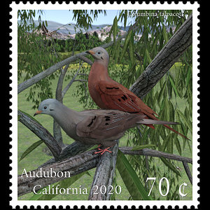 1st Place - Audubon California postage stamp by mininessie
