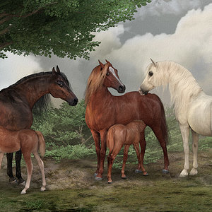 Mares and Foals/Tribute to Stubbs