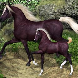 Arab Mare And Foal
