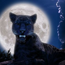 Black Panther Full Moon