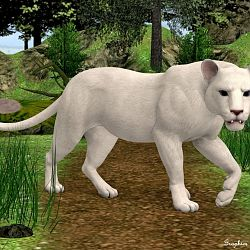 Endangered White Lioness By Fluffykatt