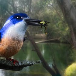 Azure Kingfisher By Stezza