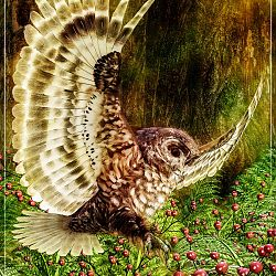 Spotted Owl By Satira Capriccio