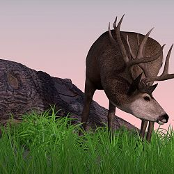 HiveWire Mule Deer Buck By Rae134