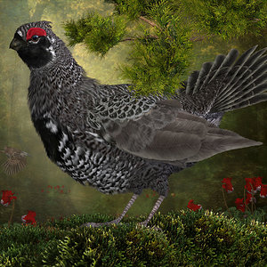 Grandeur of the Spruce Grouse.jpg