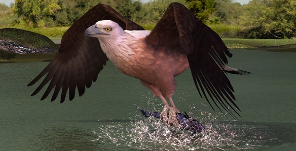 Eagle Fish By Vesubio79dc