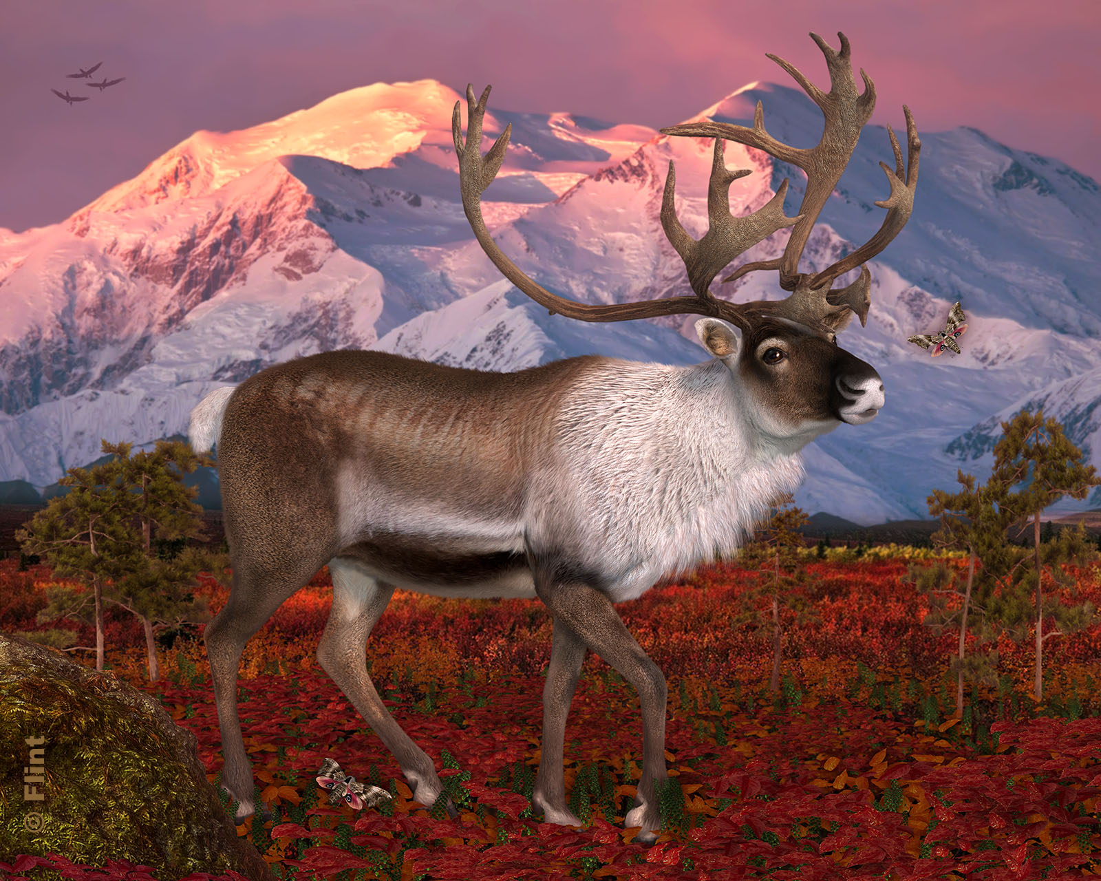 Land of the Caribou.jpg