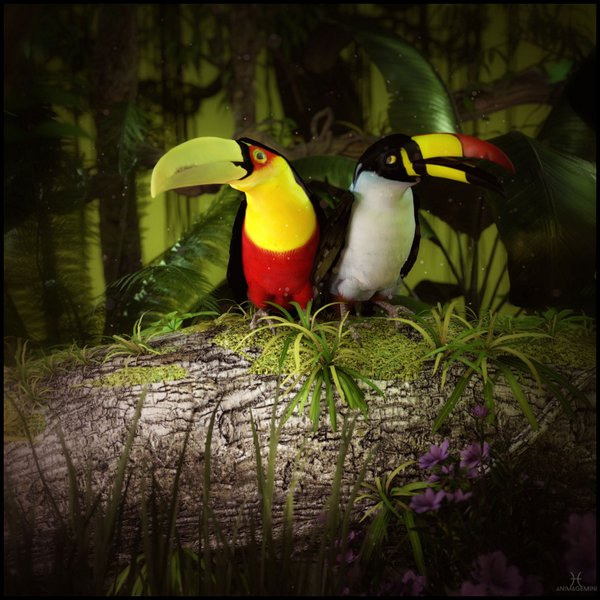 Meanwhile In The Rainforest By Ladonna